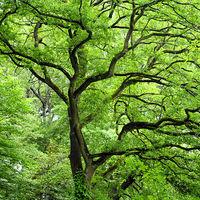 Aktion Bürgerbaum
